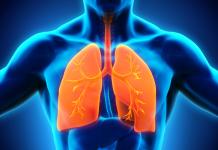 ریه های ما چگونه کار می کنند؟