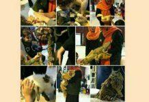 کارگاه لمس حیوانات؛ آشنایی با حیات وحش
