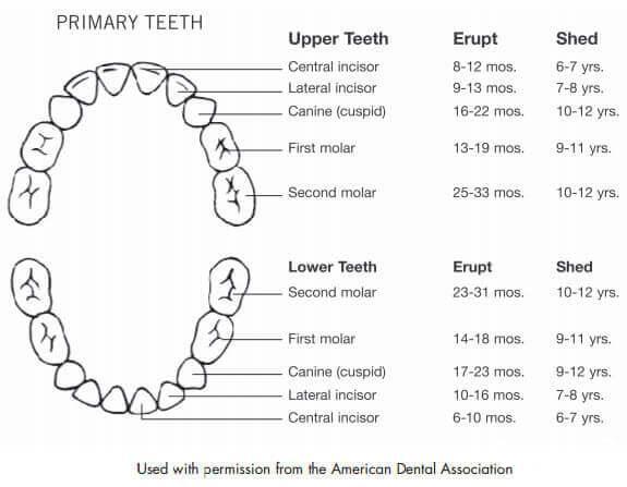 اولین دندان بچه :7 حقیقتی که والدین باید بدانند