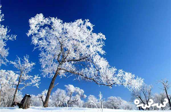 قصه پیرمرد و خواب زمستانی درخت