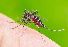 ویروس چیکونگونیا ؛ علائم و پیشگیری