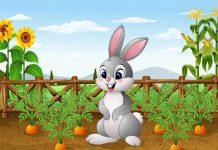 قصه خرگوش مهربان و سوپ هویج