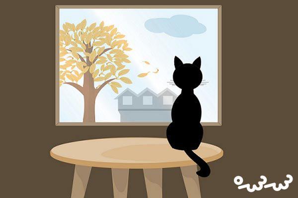 """قصه """"خانه ای برای گربه"""""""