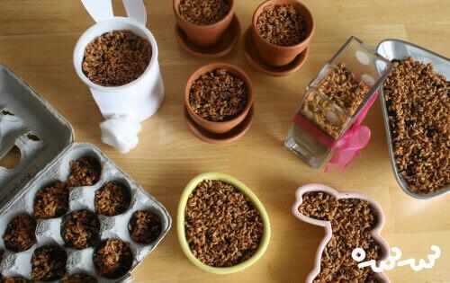 کاشت سبزه گندم در خاک